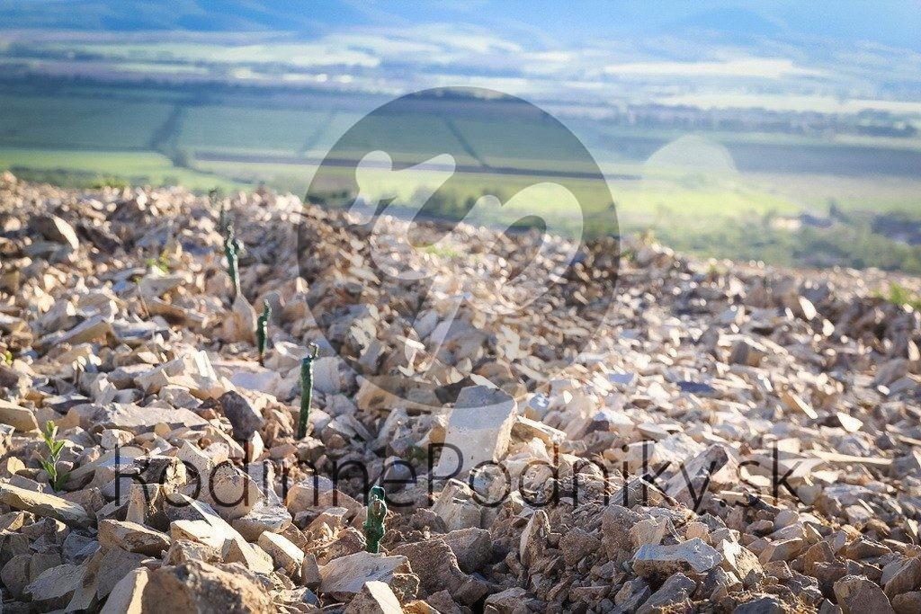 Pôda vinice Tokaj