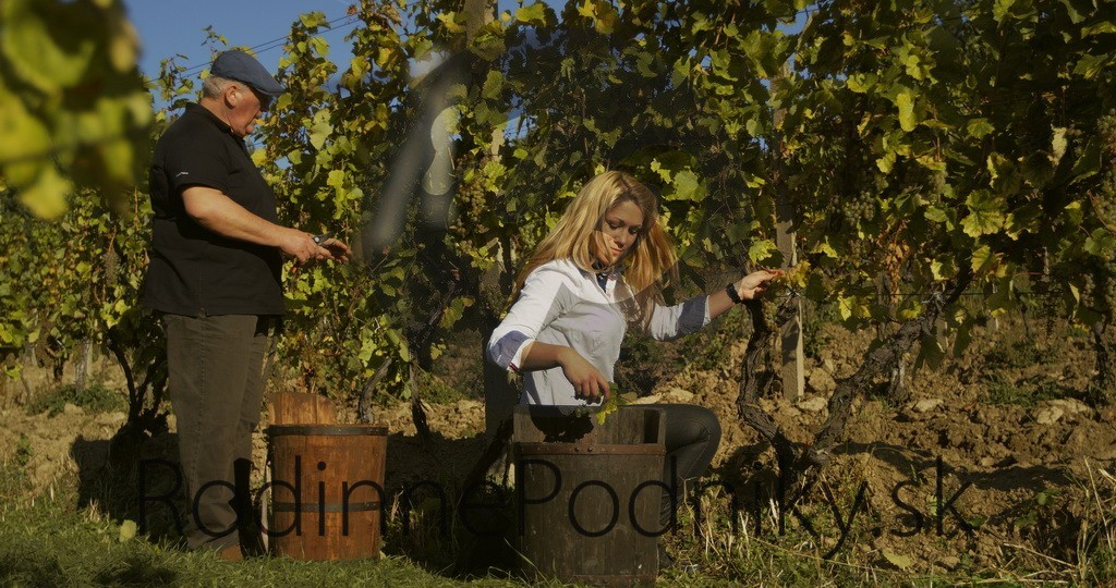 Pestovanie vína na Tokaji